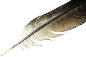 About Native American Feather Earrings